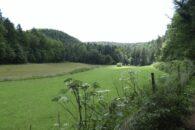 Rückweg von Burgruine Lindelbrunn.